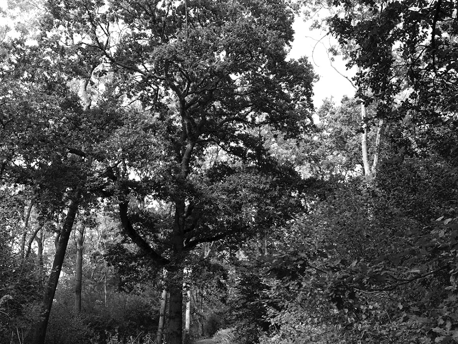 Westbury Arts Centre – Guided Walk Around Shenley Wood Top Image